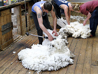 New Zealand Wool at lowest level
