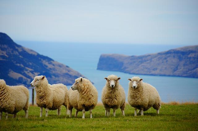 NZ Wool Market Report (27 August2020)