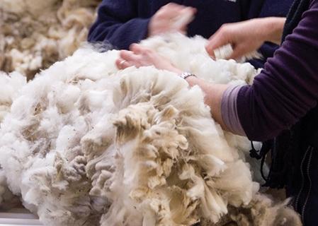 NZ Wool Market Report (26 November 2020)