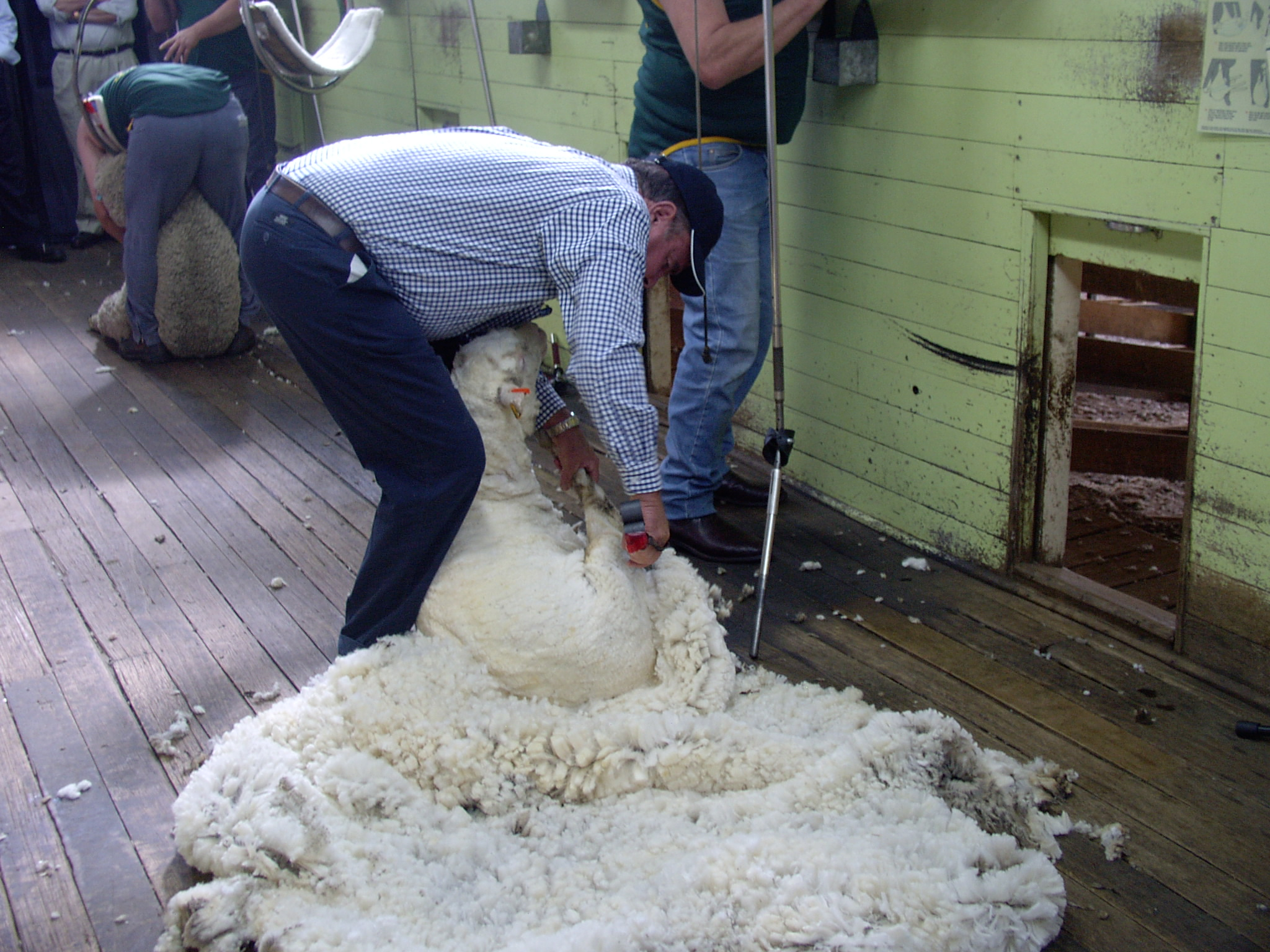 Australian wool market commentary from AWI (15 January 2021)