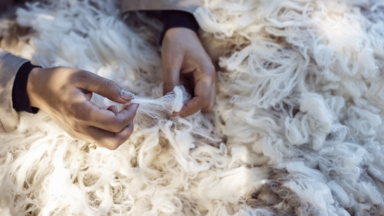 Premiums paid for non-mulesed wool
