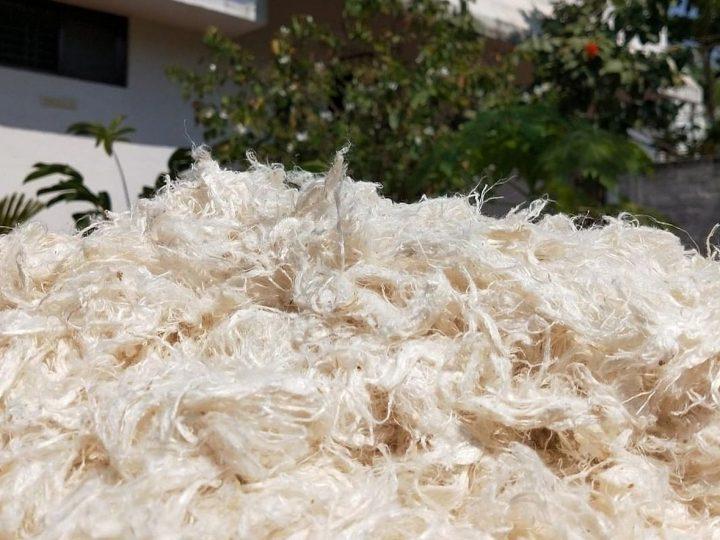 'Vegan wool' Weganool's marketing riles up Australian woolgrowers