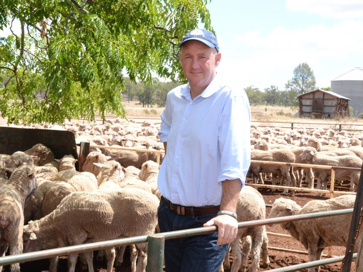 Traditional Markets for Australian Wool to Bounce Back